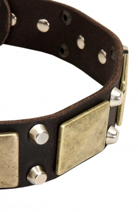 Vintage Leather Bulldog Collar with Old Brass Massive Plates and Nickel Plated Cones