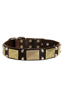 Bullmastiff Leather Collar with Massives Plates and Nickel Pyramids