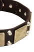 Faancy Leather English Bull Terrier Collar with Old Brass Massive Plates and 2 Nickel Pyramids