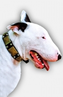 Leather English Bull Terrier Collar with Old Brass Massive Plates and 2 Nickel Pyramids