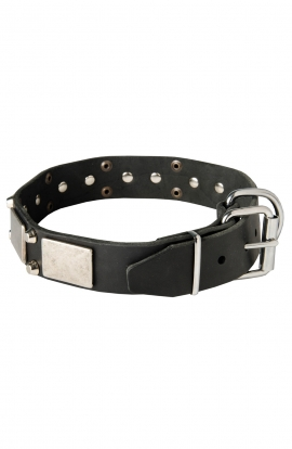 Leather Mastiff Collar with Old Nickel Plated Decor