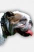 English Bulldog Collar with Old Nickel Plates and Pyramids