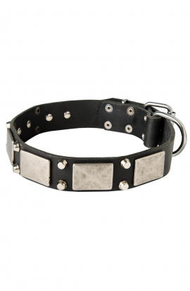 Leather American Bulldog Collar with Old Nickel Plated Decor