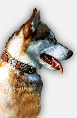 Siberian Husky Collar with Brass Plates and Nickel Plated Pyramids