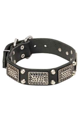 American Bulldog Collar with Massive Plates and 2 Nickel Pyramids