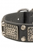 Fancy Leather Labrador Collar with Vintage Plates and Nickel Plated Pyramids