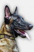 Belgian Malinois Leather Collar for Walking in Style