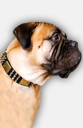 Spiked Leather Bullmastiff  Collar Cones and Plates