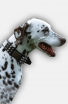 Spiked Leather Dalmatian Collar with Plates