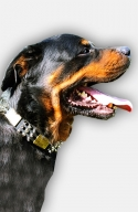 Vintage Leather Rottweiler Collar with Spikes