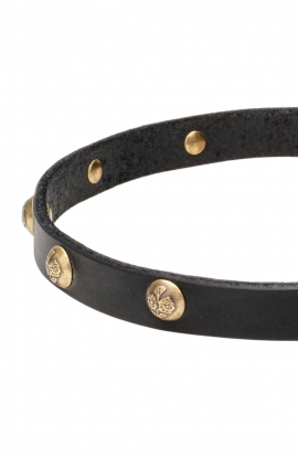 Narrow Leather Dog Collar with 1 Row Brass Studs Golden Flower