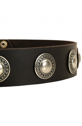 Fancy Leather Dog Collar with Vintage Nickel Conchos