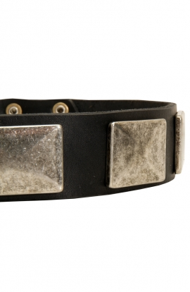 Strong Leather Dog Collar with Vintage Nickel Plates