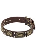 Fancy Dog Leather Collar with Vintage Brass Plates and Nickel Studs