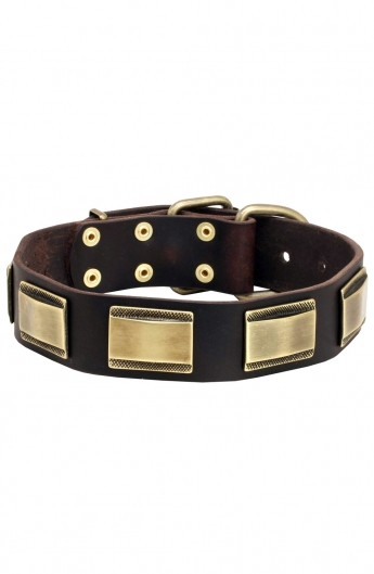 Unique Leather Dog Collar with Vintage Brass Plates