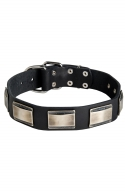 Wide Leather Dog Collar with Massive Nickel Plates