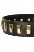 Designer Leather Dog Collar with Small Brass Plates