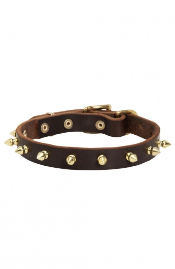 Classic Spiked Leather Dog Collar with Brass Spikes