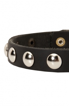 Lightweight Dog Collar for Small Dog Breeds