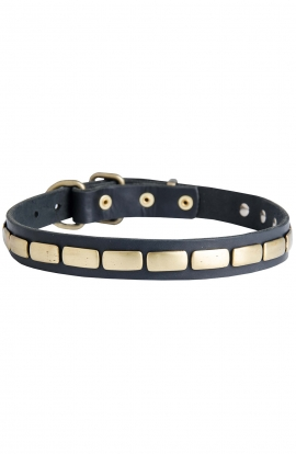 Designer Leather Dog Collar with Horizontal Brass Plates