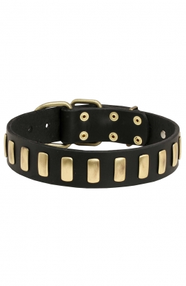 Beautiful Dog Leather Collar with Brass Plates