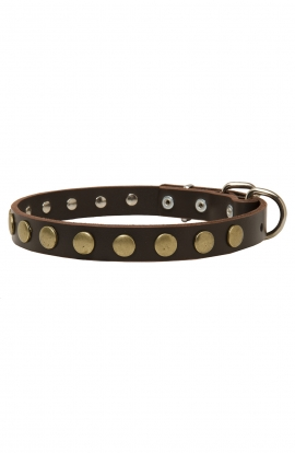 Narrow Dog Collar with Old Brass Circles
