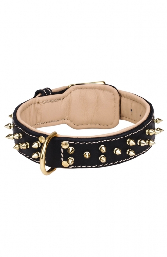 Royal Leather Dog Collar with Support Material and Gold-like Spikes