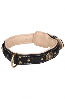 Designer Nappa Padded Leather Dog Collar with Brass Decorations