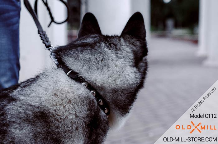 Fancy Leather Dog Collar for Siberian Husky