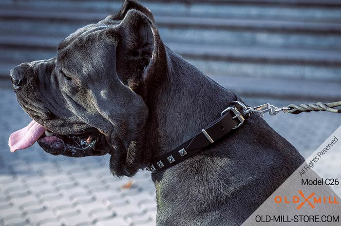 Designe Leather Dog Collar for Cane Corso