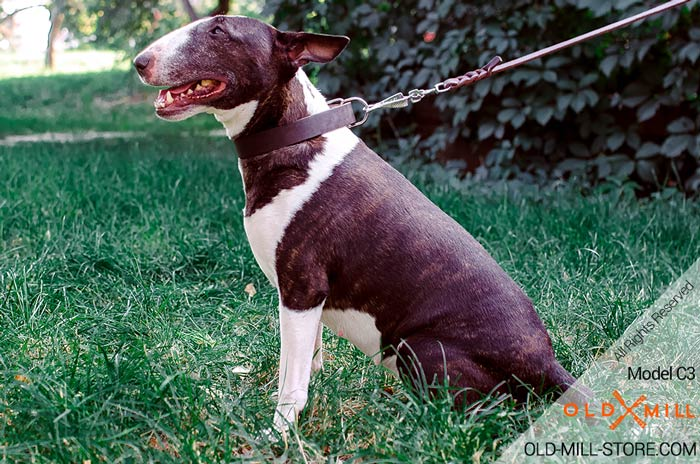 Classic Design Bull Terrier Collar