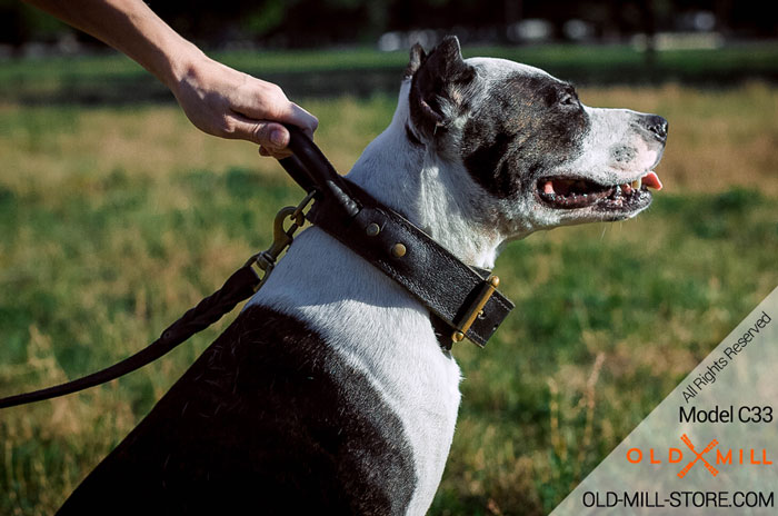 Pitbull Collar with Handle