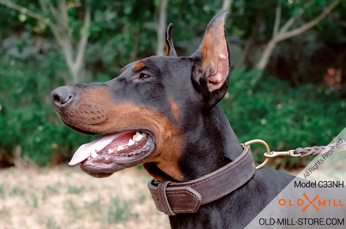 Doberman Dog Training Collar with Fur protection Plate