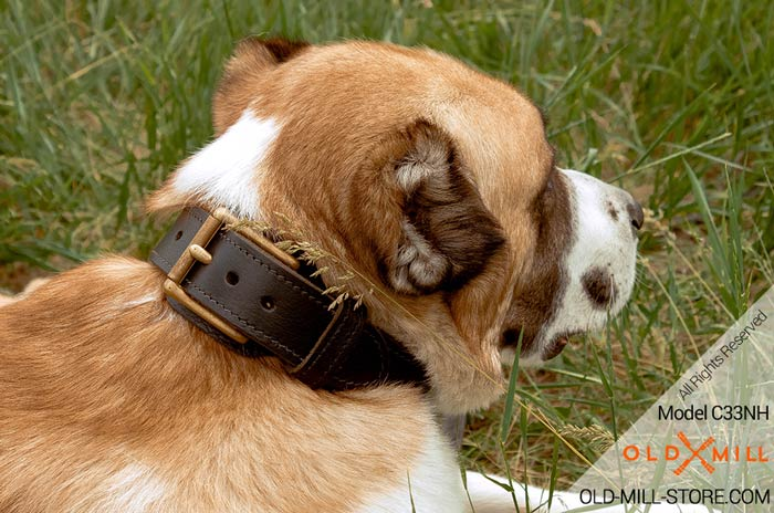 Extra Strong 2-ply Leather Collar for Central Asian Shepherd