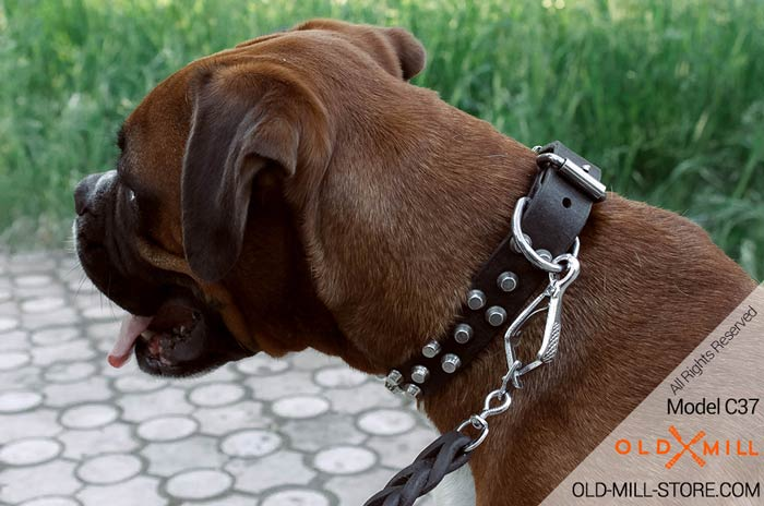Boxer Leather Dog Collar with D-ring for leash attachment
