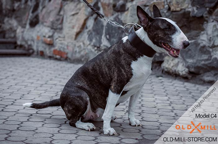 Strong Leather Collar for Bull Terrier Training