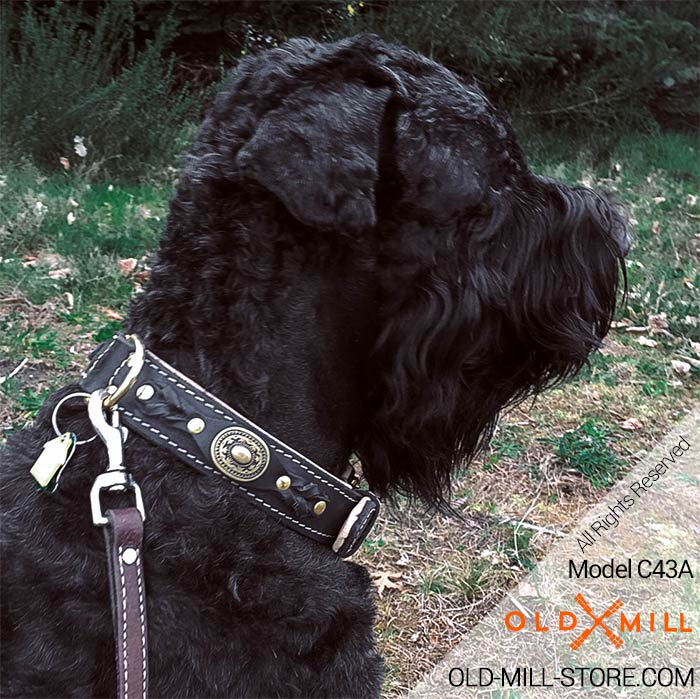 Black Russian Terrier Collar with Braids