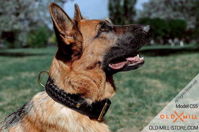 2ply Leather Dog Collar for German Shepherd