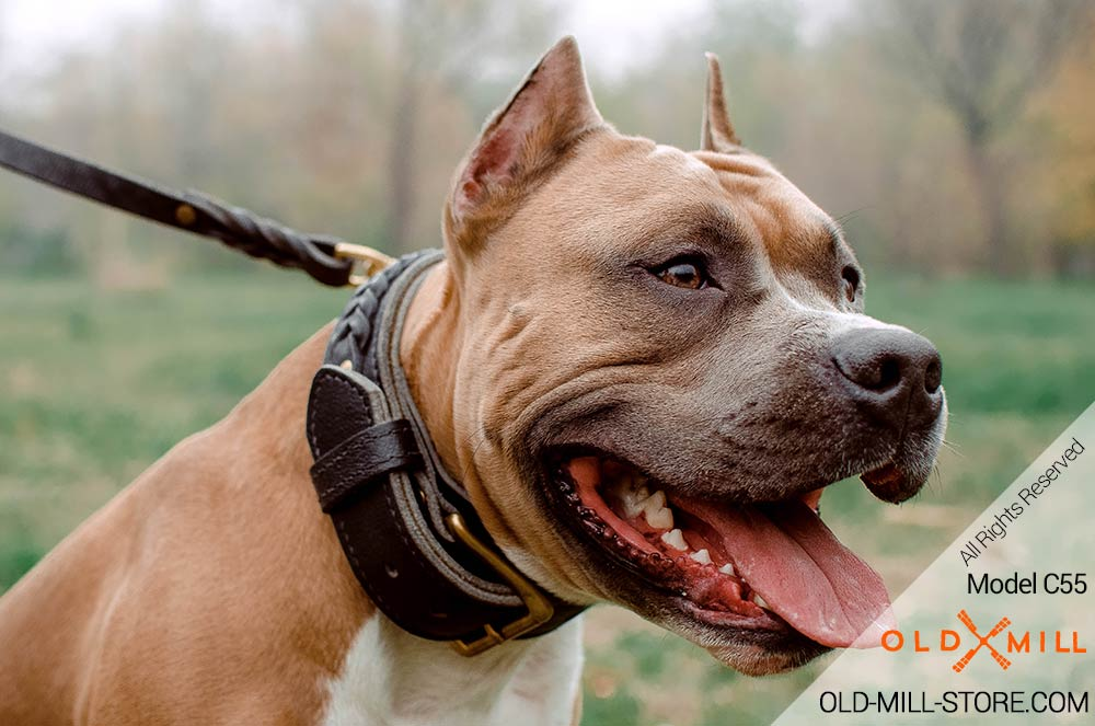 2ply Leather Dog Collar for Amstaff