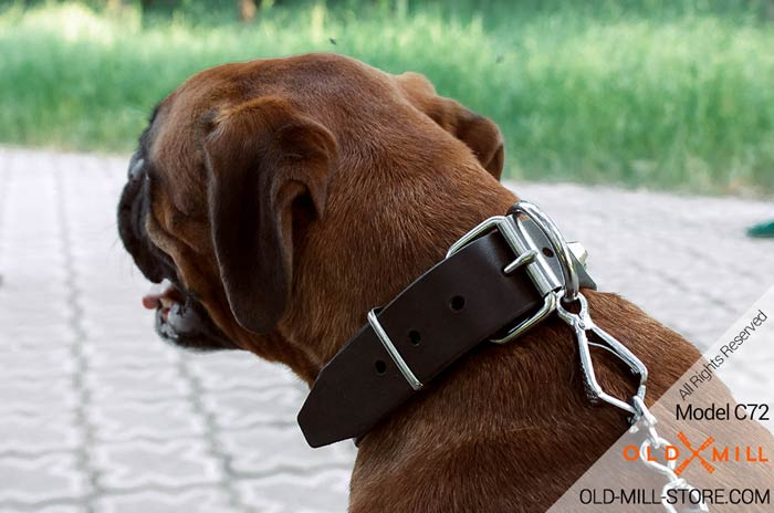 Boxer Collar with D-Ring for Leash Attachment