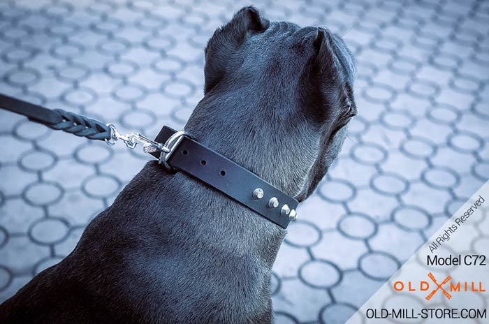 Dog Collar with Strong D-Ring for Cane Corso