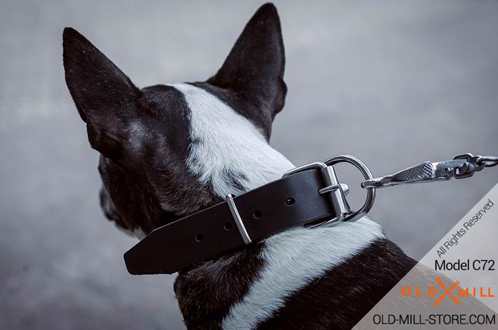 Studded Dog Collar with D-Ring for Leash Attachment