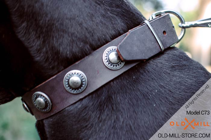 Leather Dog Collar with Vintage Nickel Conchos