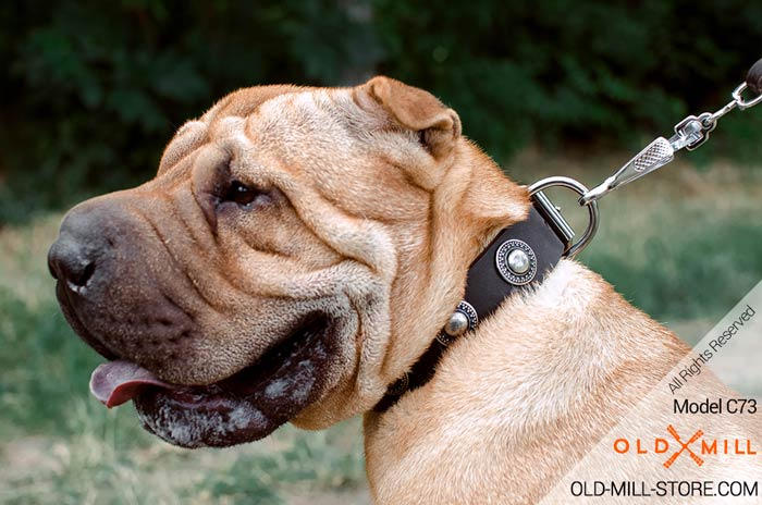 Shar Pei Collar with Silver-like Conchos