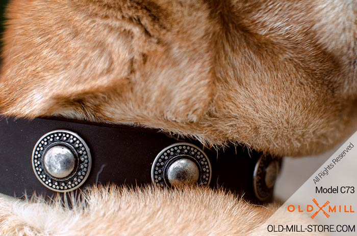 Leather Dog Collar with Old Nickel Conchos