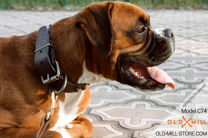 Buckle Leather Dog Collar for Boxer
