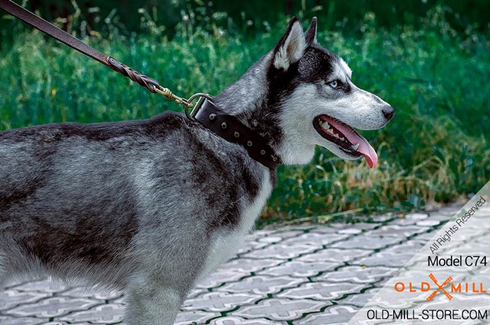 Designer Leather Dog Collar for Siberian Husky