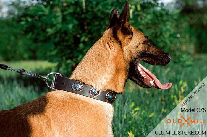 Belgian Malinois Collar with Silver Circles and Blue Stones