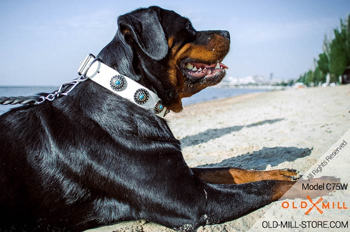 Fancy White Leather Dog Collar with Blue Stones for Rottweiler