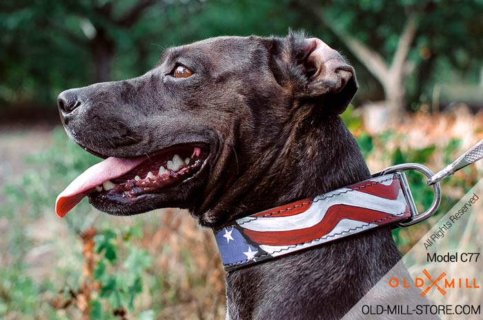 Leather Collar for Pitbull - American Style